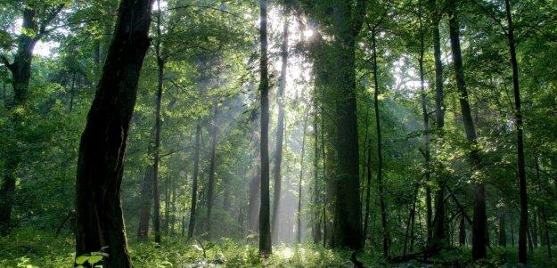 bialowieza_forest.jpg